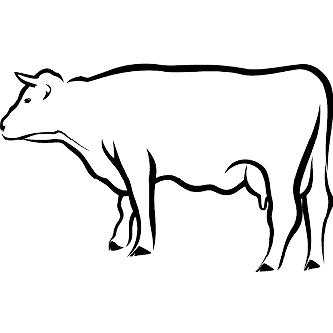 Systemprodukte für Tiergesundheit in der Rinderhaltung