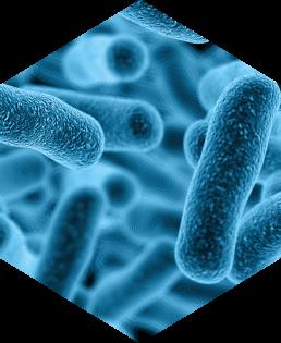 Viren Pilze Bakterien