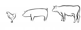 Legehenne, Hähnchen, Schwein, Rind Tierhaltung